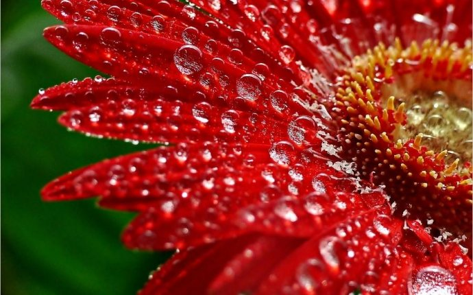 Raindrops on flower | Art: Flowers: Photos | Pinterest | Art