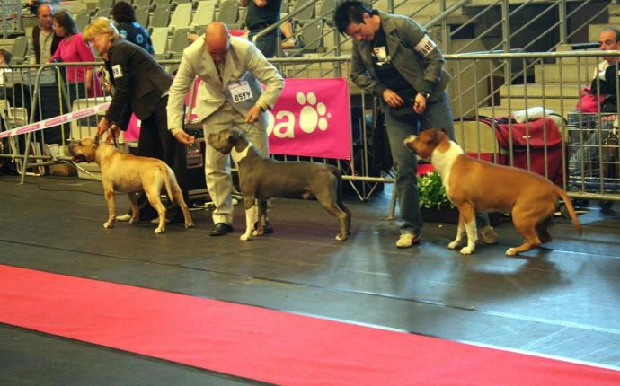 Belgium Kennel Club